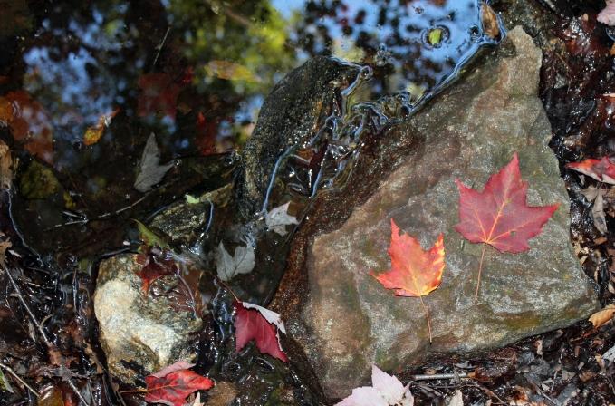 autumn_coffeetapeclimb